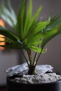 Zimmerpflanzen als Luftwäscher